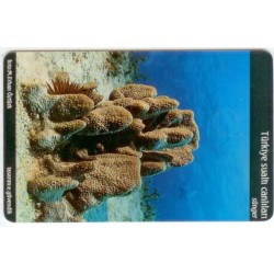 SPONGE-UNDER WATER CREATURE EXP. CARD
