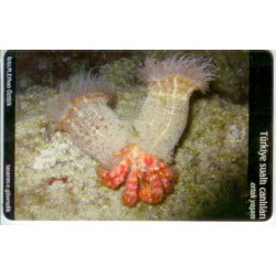 COMMON LIVE-UNDER WATER CREATURE EXP. CARD