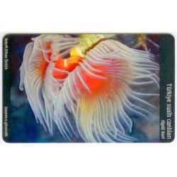TUBE FISH-UNDER WATER LIFE EXP.CARD