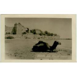 MERSIN KIZKULESİ-CAMEL