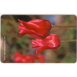 FLOWER-1 EXPERIMENTAL CARD
