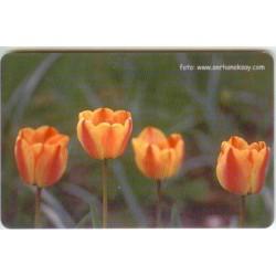FLOWER-2 EXPERIMENTAL CARD