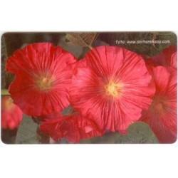 FLOWER-3 EXPERIMENTAL CARD