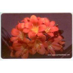 FLOWER-4 EXPERIMENTAL CARD
